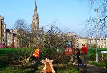 Вырубка больных деревьев голландской болезнью вязов в Эдинбурге, Великобритания